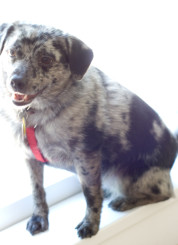 cookie-cute-dog2