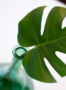 leaf-in-vase