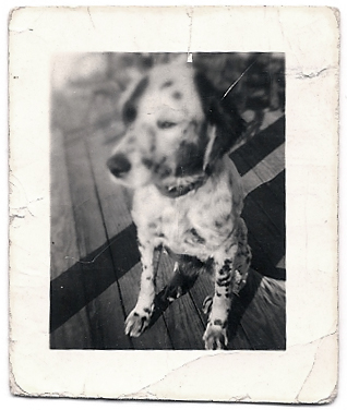 family dog in 1930