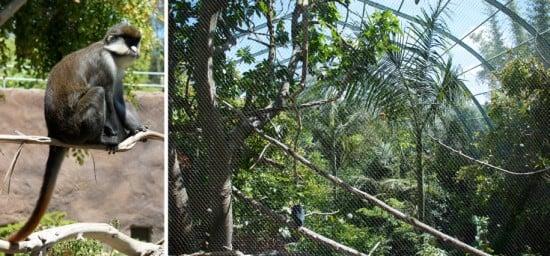 zoo aviary