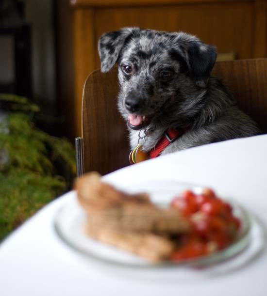 dog and my dinner