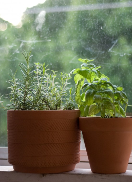 potted herb container garden