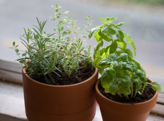 rosemary, lavender, oregano and basil