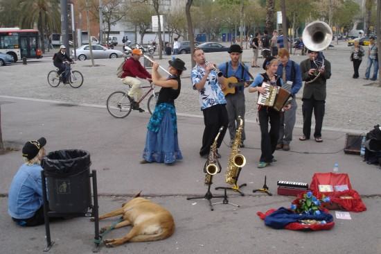 big dog with band in Barcelona