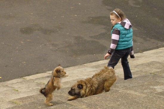 girl with dogs in Dublin