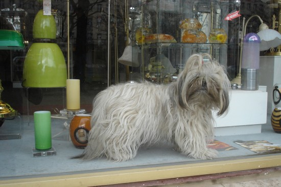fluffy dog in storefront in East Berlin, not far from the Fernsehturm.
