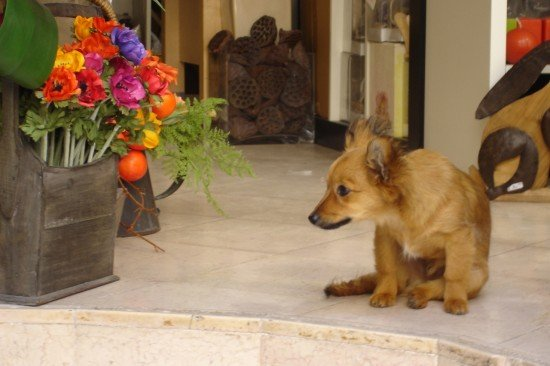 puppy in Venice with flowers