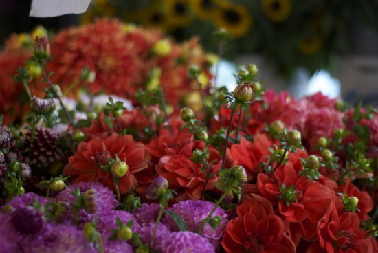 Red and purple dalias at Pike Place Market