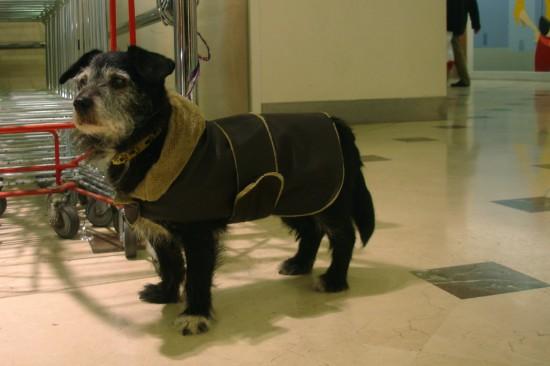 dog in shearling coat