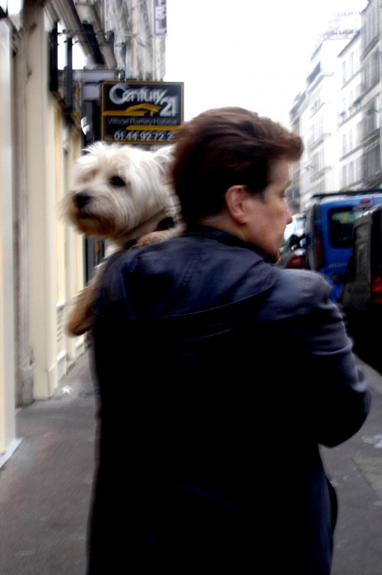 Westie in Paris