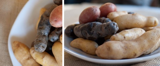multicolored fingerling potatoes in red, white and purple