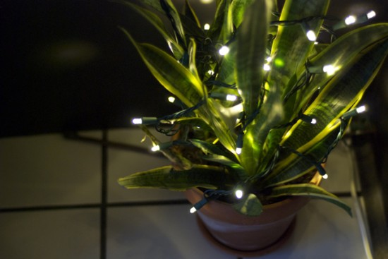 close-up of LED lights on sansevieria