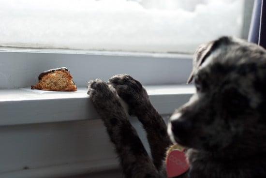 dog and macaroon