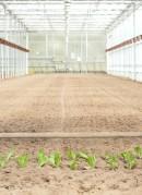 chefs-garden-greenhouse