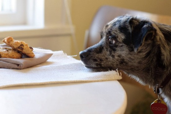dog begging for a cookie