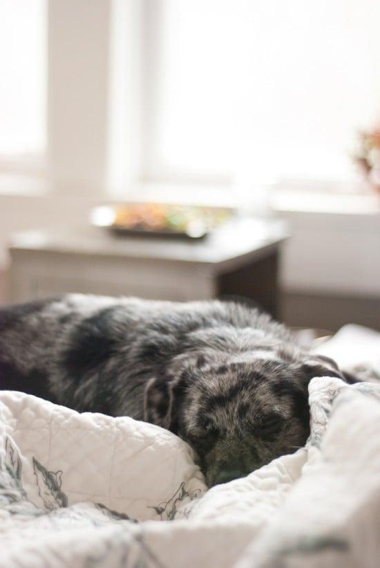 black and white mutt sleeping