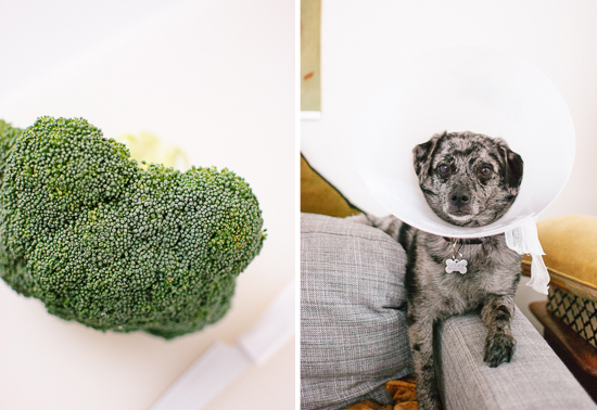 broccoli and dog