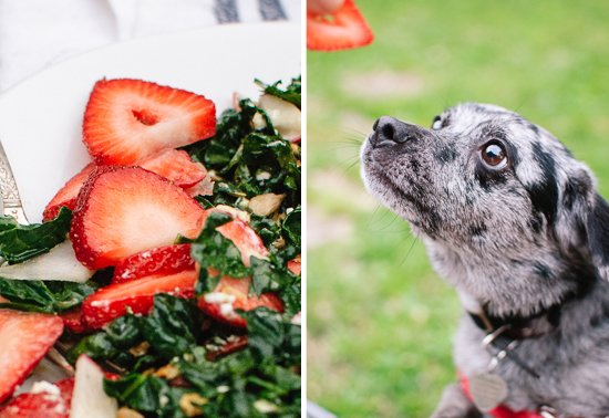 dog begging for strawberry