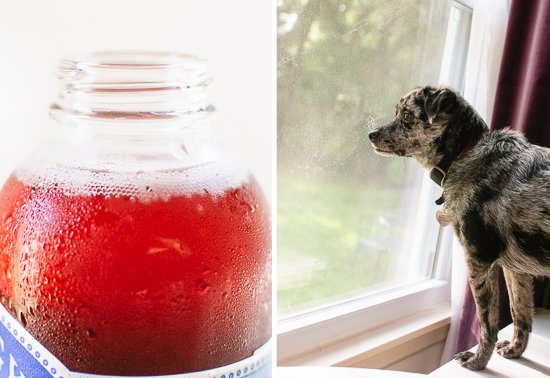 gingerberry kombucha and dog