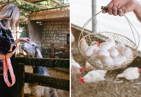 goat and eggs