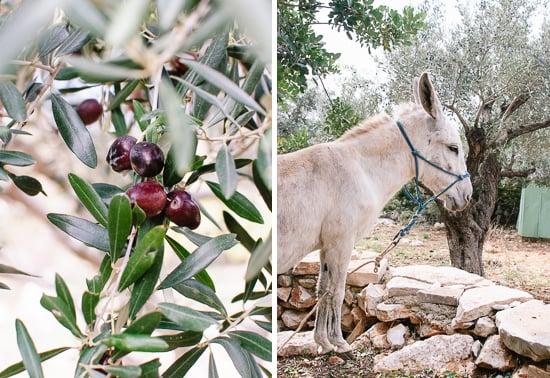 olives and donkey
