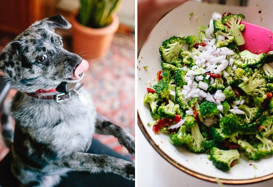 dog and broccoli salad