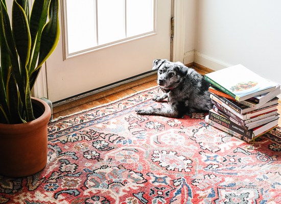 Cookie the dog, sunbathing