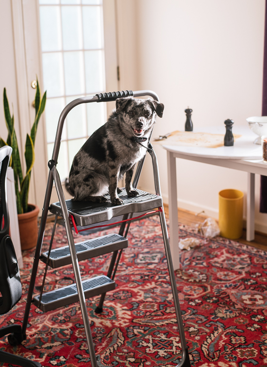 Cookie the dog - cookieandkate.com