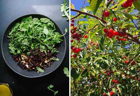 salad and tart cherries