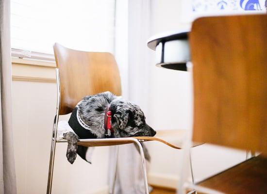 french maid dog