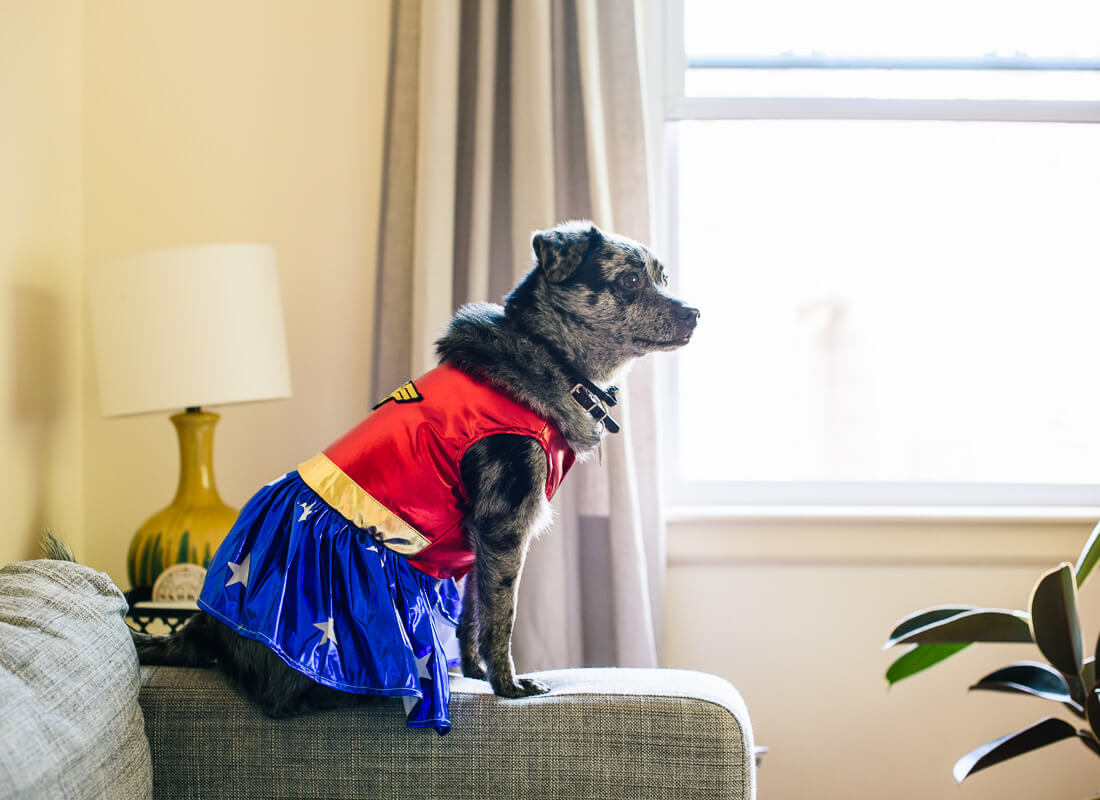 wonder woman dog