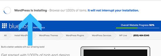 website progress